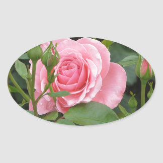 Pink rose flowers with water droplets in spring oval sticker