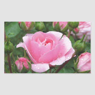 Pink rose flowers with water droplets in spring rectangular sticker