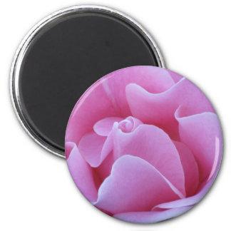 Pink Rose Fridge Magnet