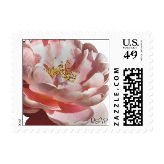 Pink Rose Full Bloom Small Wedding Postal Square Postage