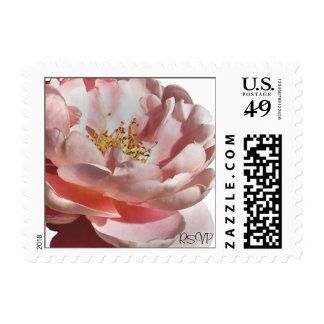 Pink Rose Full Bloom Small Wedding Postal Square Stamp