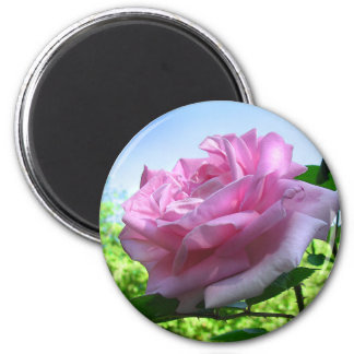 Pink Rose Garden Flower Magnet