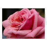 Pink Rose I Pretty Floral Photography Card