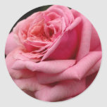 Pink Rose I Pretty Floral Photography Classic Round Sticker