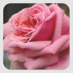 Pink Rose I Pretty Floral Photography Square Sticker