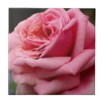 Pink Rose I Pretty Floral Photography Tile