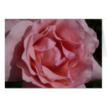 Pink Rose II Pretty Floral Card