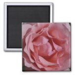 Pink Rose II Pretty Floral Magnet