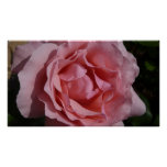 Pink Rose II Pretty Floral Poster