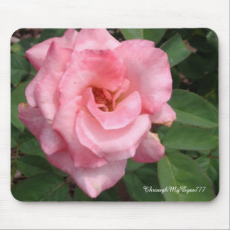 Pink Rose in Bloom Nature Mouse Pad
