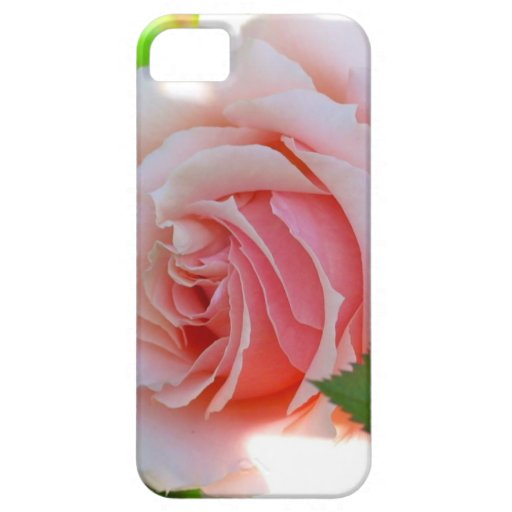 Pink Rose iPhone 5 Case
