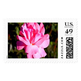 Pink Rose Large Stamp