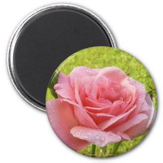 Pink Rose-Magnet magnet