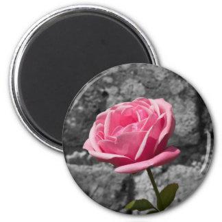 Pink Rose Fridge Magnets
