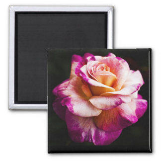 Pink Rose Magnet For Fridge and Boards