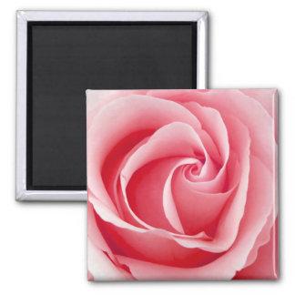 Pink Rose Magnet - Square