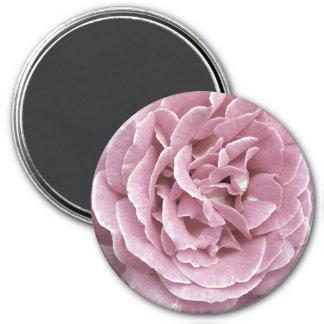Pink Rose Magnets