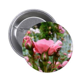 Pink Rose of Love Pinback Button