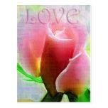Pink Rose of Love Postcards
