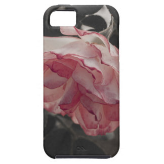 Pink Rose on Black and White Background Photo iPhone 5 Case