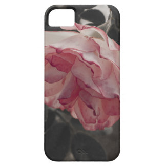 Pink Rose on Black and White Background Photo iPhone 5 Cases