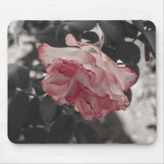Pink Rose on Black and White Background Photo Mouse Pad