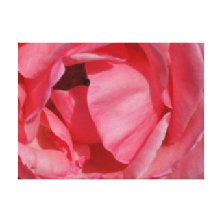 Pink Rose on Canvas