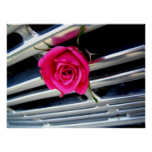 Pink Rose on Grill Poster