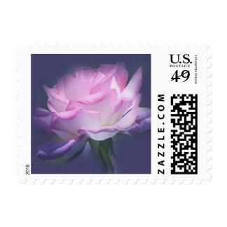 Pink rose on violet background stamp
