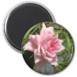 Pink Rose open Fridge Magnets