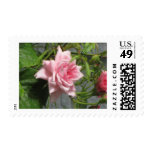 Pink Rose open Postage Stamps