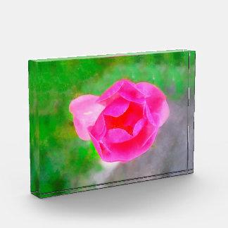 Pink rose painting award