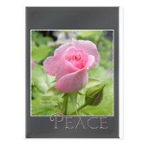 Pink Rose: Peace Postcard
