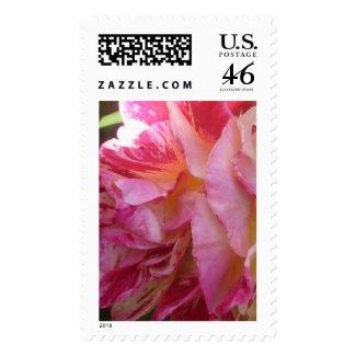 Pink Rose Petal Flutter Flower Photo Postage Stamp