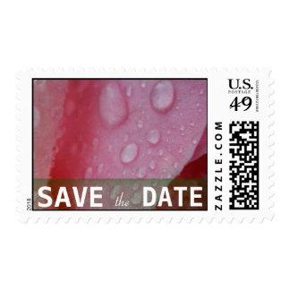 Pink Rose Petals wedding Postage Stamp