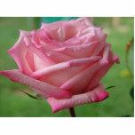 Pink Rose Photo Cutouts