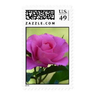 """""""Pink Rose"""" Stamps"""