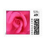 Pink Rose Postage Stamp