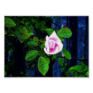 Pink Rose Posters