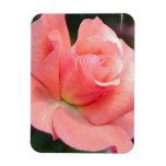 Pink Rose  Premium Magnet