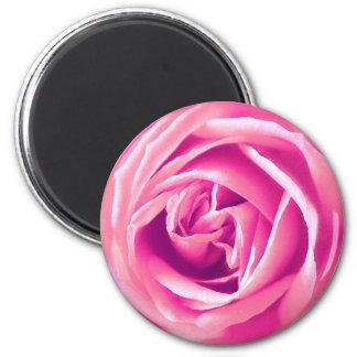 Pink rose print magnet