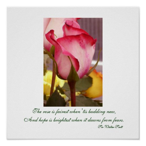 Pink Rose Print/Poster Poster