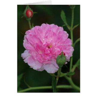 Pink Rose Raindrops Card