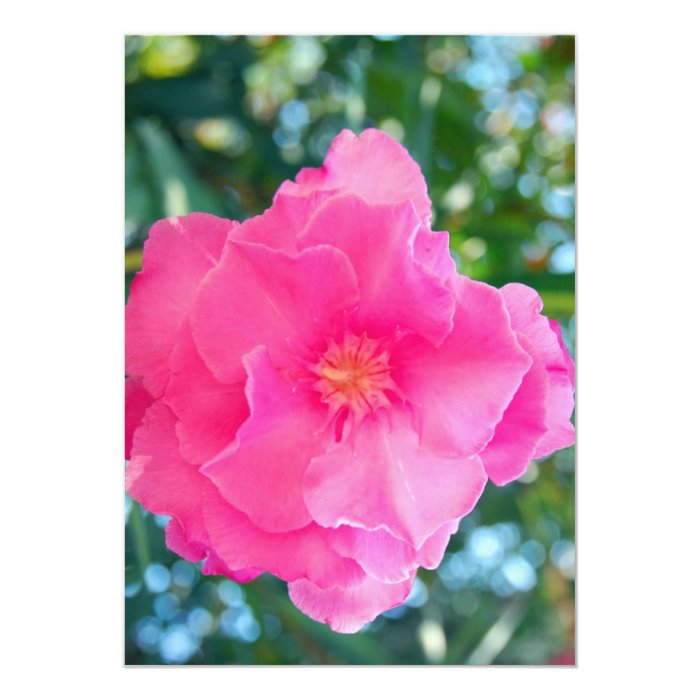 PINK ROSE ROCK1536 BEAUTY NATURE FLOWERS PHOTOGRAP CARD