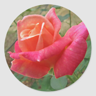 Pink Rose  Round Stickers