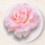 Pink Rose 'Scentsation' Beverage Coaster