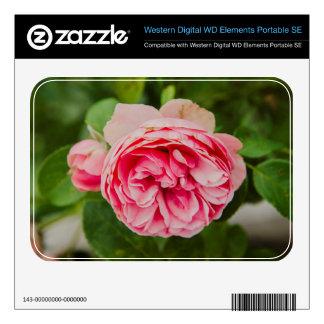Pink rose WD elements SE skins