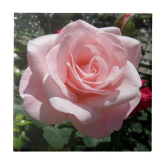 "Pink Rose Small (4.25"" x 4.25"") Ceramic Photo Tile"