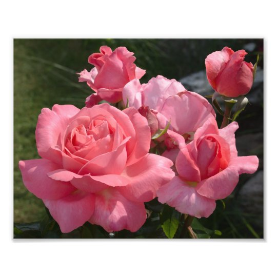"""Pink Rose """"Special Anniversary"""" Photo Print"""