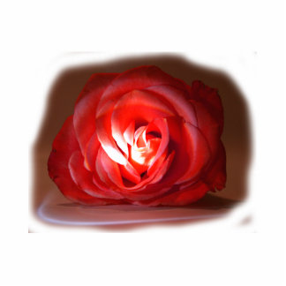 Pink Rose Spotlighted Iimage Acrylic Cut Out